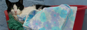 cattery-banner2